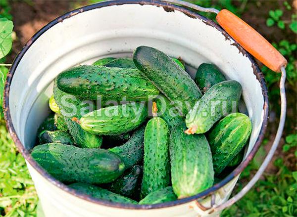 Огуречный салат без кипячения